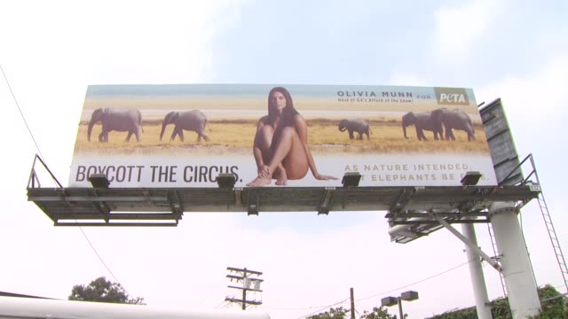 atmosphere at the olivia munn unveils her new billboard for peta at los angeles ca - olivia munn stock videos and b-roll footage