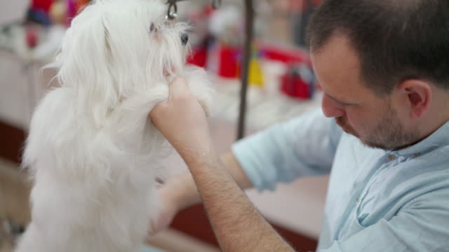 at the pet grooming salon - working animal stock videos & royalty-free footage