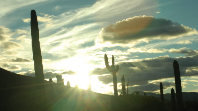 atardecer con cactus - cactus sunset stock videos & royalty-free footage