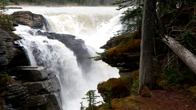 athabasca falls jasper national park - wilderness stock videos & royalty-free footage