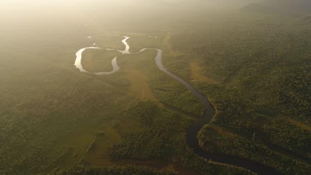 vídeos de stock, filmes e b-roll de mata atlântica e as zonas úmidas - floresta tropical