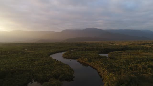 atlantic forest (mata atlantica) and the wetlands - south america stock videos & royalty-free footage