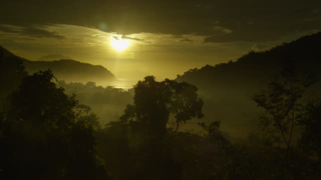 atlantic forest at sunrise. - rainforest stock videos & royalty-free footage