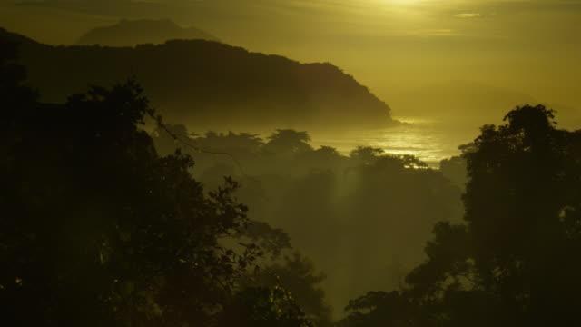 Atlantic forest at sunrise.
