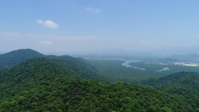vídeos de stock, filmes e b-roll de mata atlântica no brasil - floresta tropical