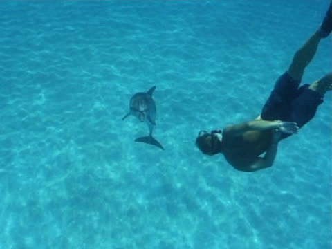 atlantic spotted dolphins  mcu swims towards snorkeler, they interact as they both swim to the surface. - bimini stock videos & royalty-free footage