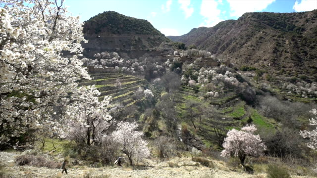 stockvideo's en b-roll-footage met atlas mountains with almonds in full bloom - bergketen