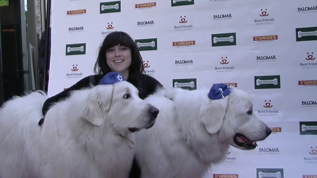 atmosphere at the evanger's presents 'passover seder for dogs' hosted by dog news daily at los angeles ca - passover stock videos and b-roll footage