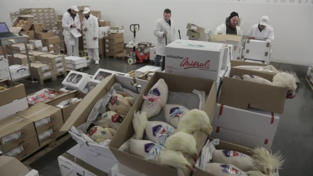 atmosphere in the poultry pavilion at rungis international wholesale market before christmas on december 12 2019 in rungis france - poultry stock videos & royalty-free footage