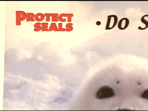 protectsealsorg at the celebrity save the seal day: press conference hosted by celebrities against the seal hunt on march 28, 2007. - aquatic organism stock videos & royalty-free footage