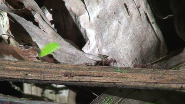 mit ergometer verbunden, ameisen tragen leafs - ameisen stock-videos und b-roll-filmmaterial