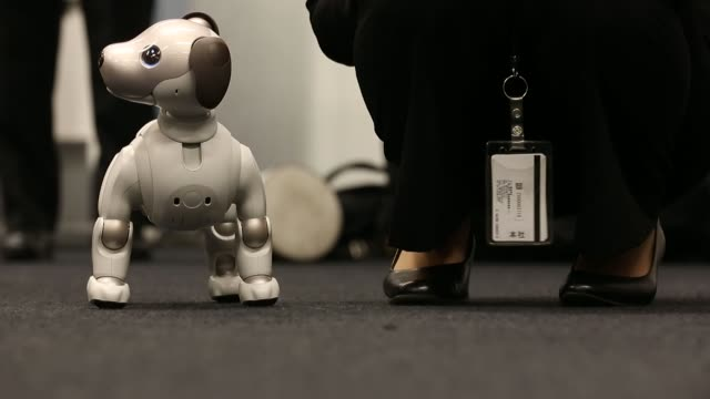 attendees play with sony corp's robotic dog 'aibo' during its sales launch event in tokyo japan on thursday jan 11 photographer tomohiro... - sony stock videos & royalty-free footage
