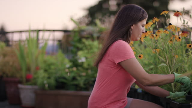 attractive adult female gardening on her rooftop garden - potting stock videos and b-roll footage