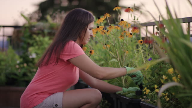 Attractive adult female gardening on her rooftop garden