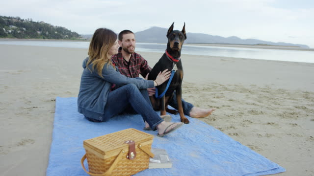 attractive couple and their dog having a picnic on the beach - blue dog stock videos & royalty-free footage