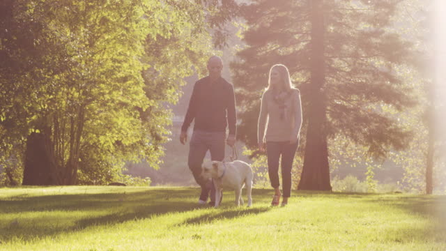 attractive couple walking their dog in a park - coppia di età matura video stock e b–roll