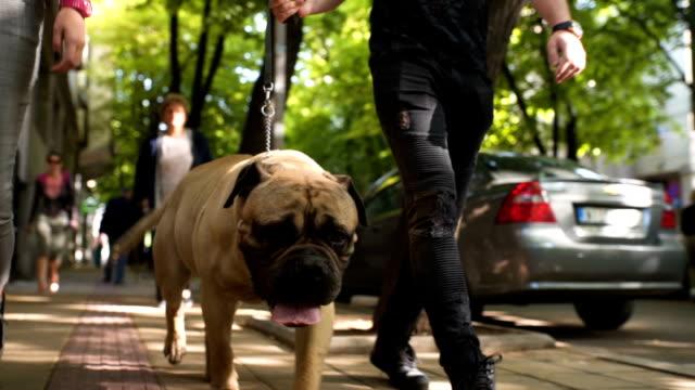 attractive couple walking their dog - guinzaglio per animale video stock e b–roll