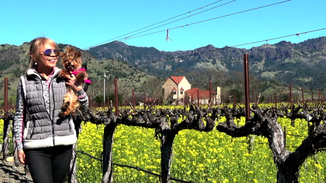 attractive fit woman in the vineyard in napa valley california - northern california stock videos & royalty-free footage
