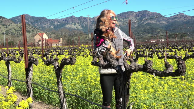 attractive fit woman in the vineyard in napa valley california - mustard stock videos and b-roll footage