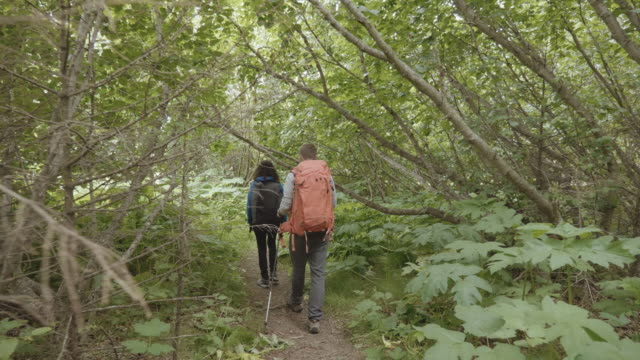 uhd 4k: attractive interracial couple hiking through a jungled forest - homer alaska stock videos & royalty-free footage