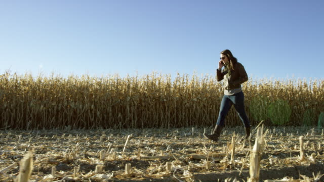 attractive latina woman in her 20s walks through a cornfield at harvest while talking on her cell phone under a clear, blue sky at sunset - north america stock videos & royalty-free footage