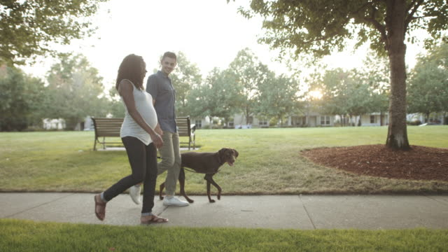 uhd 4k slo mo: attractive mixed race pregnant couple taking their dog for a walk - new life stock videos and b-roll footage
