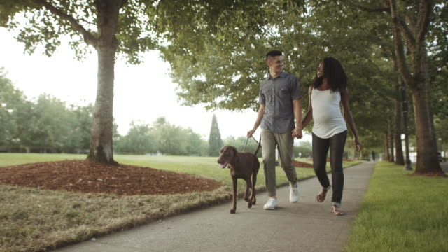 uhd 4k slo mo: attractive mixed race pregnant couple taking their dog for a walk - responsibility stock videos and b-roll footage