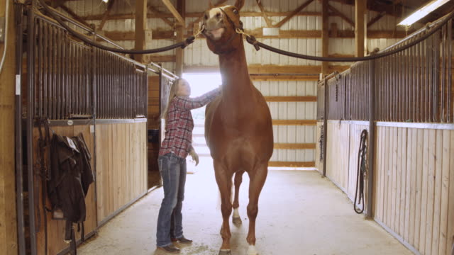 attractive woman grooming a horse in a stable - ranch home stock videos & royalty-free footage