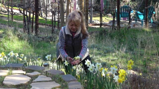 Aantrekkelijke vrouw narcissen bloemen plukken