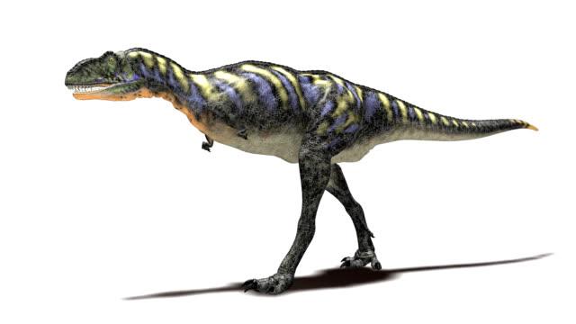 aucasaurus dinosaur walking - 恐竜点の映像素材/bロール