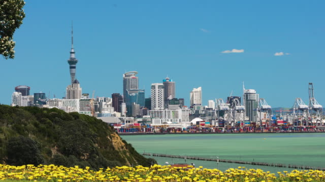 auckland city through flowers. - new zealand stock videos & royalty-free footage