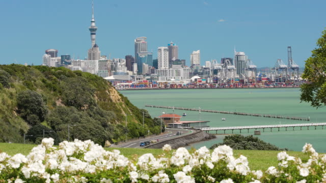 auckland skyline through flowers on a sunny day. - auckland stock videos & royalty-free footage