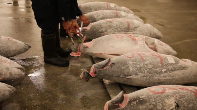 auction of tuna at tsukiji fish market in tokyo. - medium group of objects stock videos & royalty-free footage