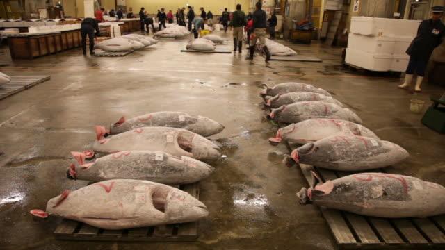 auction of tuna at tsukiji fish market in tokyo. - tuna seafood stock videos & royalty-free footage