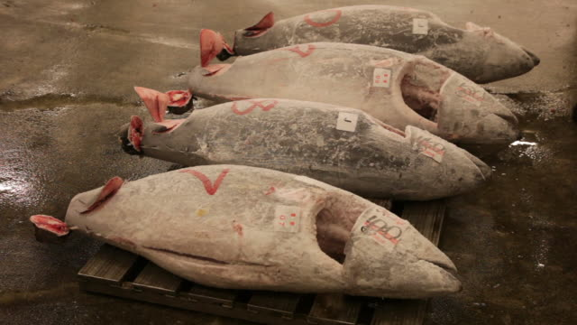 auction of tuna at tsukiji fish market in tokyo. - tuna seafood stock videos and b-roll footage