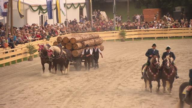 vídeos de stock e filmes b-roll de audience and man on horses, men on horses, horse drawn carriage with wood - grupo médio de animais
