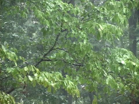 vídeos de stock e filmes b-roll de áudio de trovoada incluído - árvore tropical