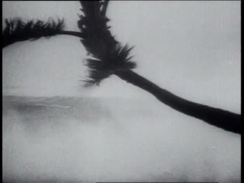 vídeos y material grabado en eventos de stock de august 16, 1951 hurricane charlie wind and rain causing strong ocean waves / kingston, jamaica - 1951