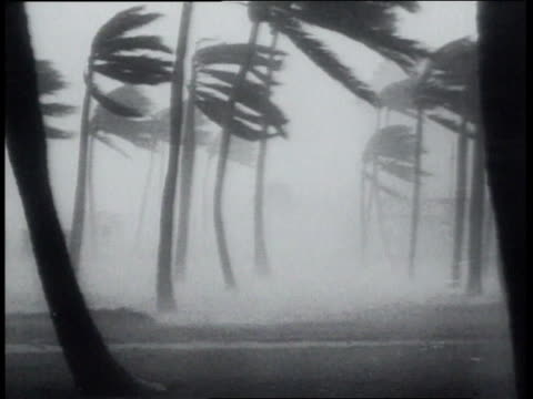 august 16, 1951 montage hurricane charlie smashing wind and rain through streets / kingston, jamaica - 1951 stock videos & royalty-free footage