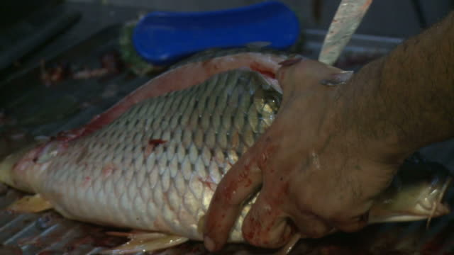 vídeos de stock e filmes b-roll de august 16 2010 cu cook gutting a fish in a restaurant kitchen / baghdad iraq - amanhar o peixe