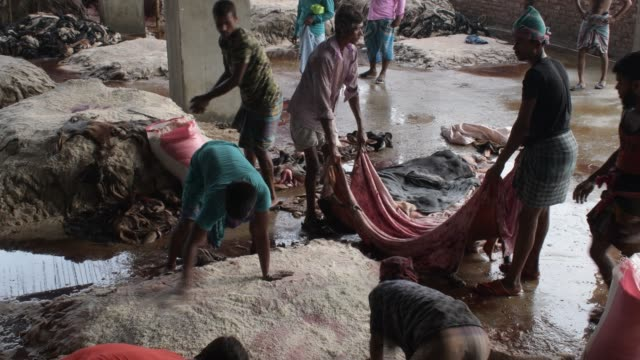 august 2020: workers spray salt on rawhides of sacrificial animals at savar tannery near dhaka. rawhide traders and tannery owners have started... - tierhaut stock-videos und b-roll-filmmaterial