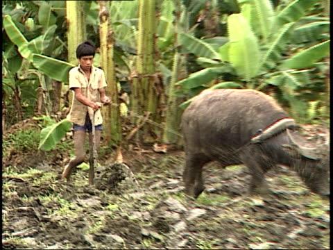 vídeos y material grabado en eventos de stock de august 4, 1985 farmer plowing land with a carabao / philippines - oficio agrícola