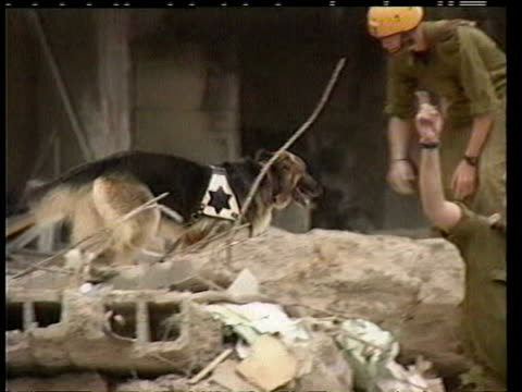 vídeos de stock e filmes b-roll de august 9 1998 film montage people and crane in front of aftermath of car bombing at us embassy/ ws rescue dogs arriving to search for survivors/ ws... - embaixada dos eua