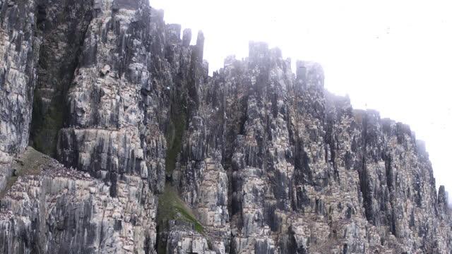 la pan auk and guillemot nesting cliffs with birds in flight - auk stock videos & royalty-free footage