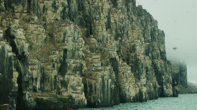 ws auk and guillemot nesting cliffs with birds in flight - auk stock videos & royalty-free footage