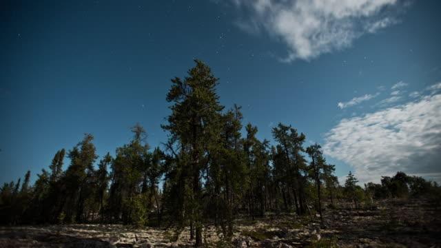 t/l ws aurora borealis in moonlit summer night over forest / yellowknife, northwest territories, canada - 30秒以上点の映像素材/bロール