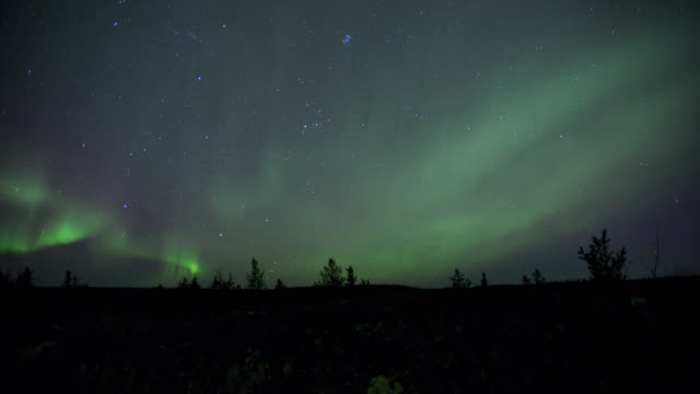 T/L Aurora borealis on dark summer night with silhoute of tree tops / Yellowknife, Canada