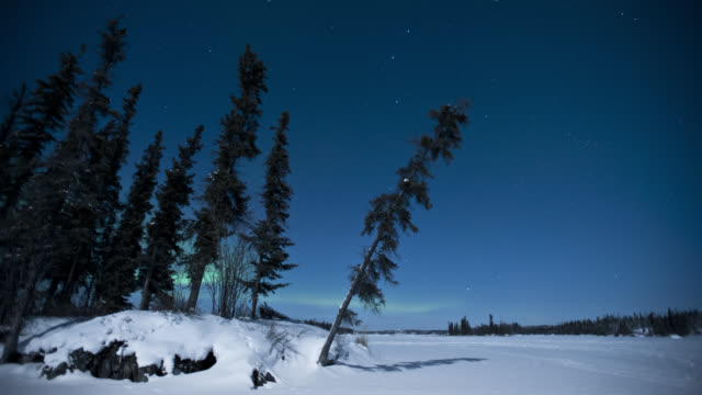 T/L Aurora borealis on full moonlit winter night behind trees / Yellowknife, Canada