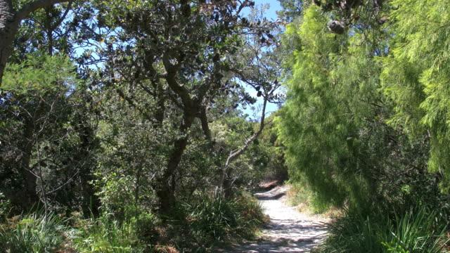 Australia Banksia woodland path