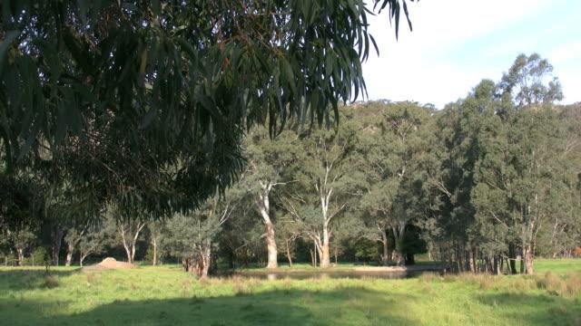 australia grampians small lake - medium shot stock videos & royalty-free footage